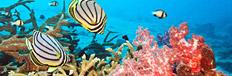 Best dive sites in Maldives